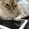 きゃーっ! 猫がタブレットの上にゲロ吐いてた! 壊れてないよね・・・