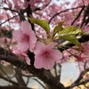 今週の練習記録(2/18~2/24)春を機に、環境を変えてみようかな。