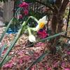 水仙が咲きました!