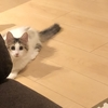 にじみ出る貫禄!我が家のお猫様ひま日記3