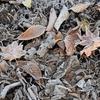 落ち葉のじゅうたん、きれいだけどね