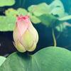 小さな夢の蕾に、いつか小さな花が咲く