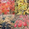 四季の森の紅葉