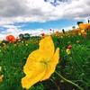 花粉症のメイク悩み対策