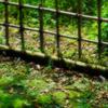 垣根の影に染み込むは どこから聞こえる秋の鈴の音