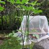 10/2 夏オクラ植えてみました。 52日目