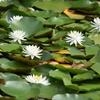 佐紀 梅雨時のこと/空気をつかめば水が滴ってくるような日々でしたが、鳥も、昆虫も、花もいきいきしていました。