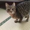 猫脱走対策