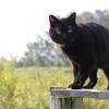 黒猫ネロとの出会い