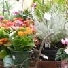 Merry Gardenでブランチ