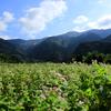 愛媛県東温市 井内の蕎麦の花