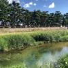 初秋の芦屋川