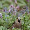 春の鳥たち
