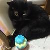猫の去勢・避妊手術は、猫の本能を無視した可哀想なこと…?