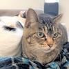 でぶねこあんこ&もなかの友達なつめは、いまも触れない猫です