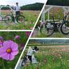 【アスピア玉城】自転車でサイクリング!美人さんとコスモス畑を見に行ってきた!