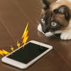 【iPhone】いきなりiPhoneから変な音がしたらまずやること!