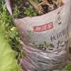家庭菜園の工夫(0円植木鉢と生ゴミ肥料の扱い方)@家庭菜園 @知恵 @お得