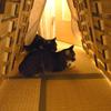 猫にっき 作楓