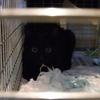 2012 1月 のら猫手術。