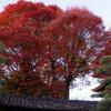12月の紅葉 東寺