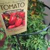 San Marzanoトマトの苗。