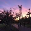 【出張でもランニングしよう!】那覇 奥武山公園ジョギングコース 〜 ペース走もインターバル走もできるよ!