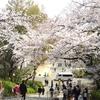 花見ラン3回目、大阪城公園