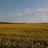 菜の花を求めて ドイツへ 4 フォーゲルザンク