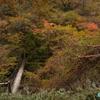 魔の山「大台ヶ原」 ー シオカラ谷、そして温泉で身体を癒す ー  《紅葉  #9》