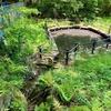 北八朔公園の魚池(神奈川県横浜)