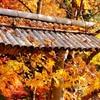 12月1日から京都へ