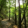 柳生街道:滝坂の道と仏像達