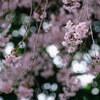 2018/04/01 千鳥ヶ淵と桜