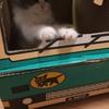 クロネコヤマトの段ボールでリアルな猫の宅急便を作る!