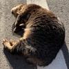 地域猫・コヤタさんに学ぶ、出世に役立つ人心掌握術