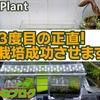 水草の栽培実験~キューバパールグラス編~第3回経過報告書