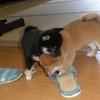 子犬のお宝画像を放出 Part3(2013年)