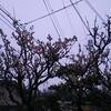 篠山ABCマラソン 前日からレース10キロまで