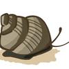 【メダカブーム】を陰で支える人気者【タニシ】にまつわるエトセトラ