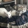 ぴったりくっついて暖をとる仲良し猫団子。