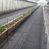 いちご栽培の省力育苗ベンチを直管パイプで製作