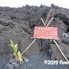 2018年のハワイ島噴火でできた一番新しい溶岩を見てきた~2019.4<後編>