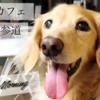 愛犬とカフェ ダックスのリオとちびっ子マイティ