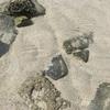 シーチャン島の陣田筏と砂浜で遊んできた話、その2