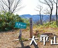 長岡市栃尾の「大平山」でカタクリの花を愛でる