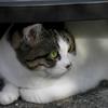 時々訪問してくる野良猫の名前を募集したら決まりました。気が強いメスネコです。