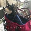 生後139日目 自転車犬への道 その2