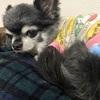 【犬のダイエット】ダイエット大作戦!