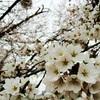 春という名